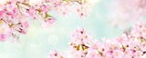 Pink cherry tree blossom flowers blooming in spring, Easter time and Mothers day, against a natural sunny blurred garden banner background of pale blue and white bokeh.
