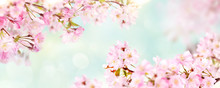 Pink Cherry Tree Blossom Flowe...