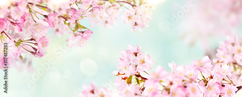 Billede på lærred Pink cherry tree blossom flowers blooming in spring, Easter time and Mothers day, against a natural sunny blurred garden banner background of pale blue and white bokeh
