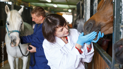 Vet giving medical exam to horse Canvas Print
