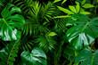 Leinwandbild Motiv Dark green foliage nature background from clean tropical plant leaves
