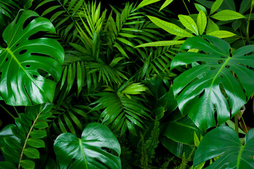 Panel Szklany Do sypialni Dark green foliage nature background from clean tropical plant leaves