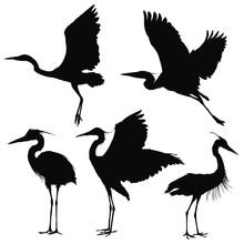 Heron Silhouette Set. Vector I...