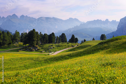 Field with alpine yellow flowers from Sella pass, Dolomites Alps, Italy, Europe Wallpaper Mural