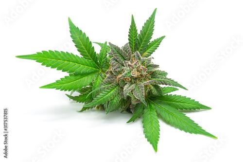 Macro of Medical Marijuana Bud or Hemp Flower with Green Leaves Isolated on Whit Tapéta, Fotótapéta