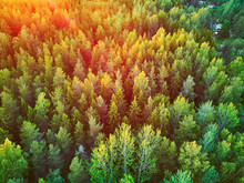 Scenic Top Down View Of Mixed Forest In Finnish Countryside, At Sunset