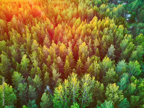Obraz Scenic top down view of mixed forest in Finnish countryside, at sunset - fototapety do salonu