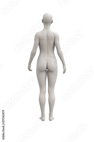 Cuadros en Lienzo Female body anatomical illustration over a white background.