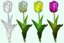Hand Drawing Tulip. Realistic ...