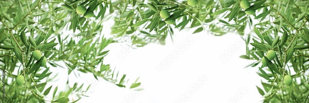 Fototapeta Healthy organic olive, green olive on branch of olive tree