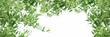 Leinwanddruck Bild - Healthy organic olive, green olive on branch of olive tree