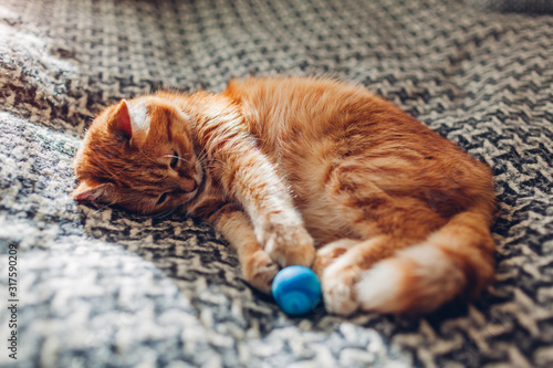 Ginger cat playing with ball on couch in living room at home Slika na platnu