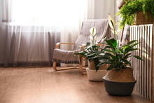 Beautiful Potted Plants In Sty...