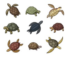 Sea Turtle Animal, Tortoise An...