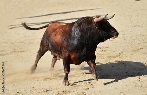 Photo toro español con grandes cuernos en una plaza de toros