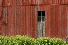 Old Barn With Red Wooden Walls Surrounded By Bushes Under The Sunlight