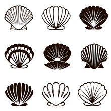 Monochrome Collection Of Various Seashells Isolated On White Background