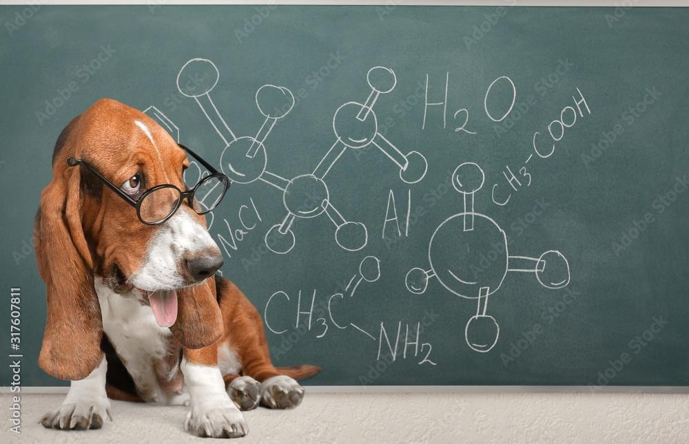Fototapeta academic math dog in glasses on a blackboard background