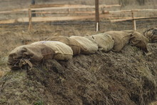 Sandbags Made From Coarse Fabric Reinforce The Edge Of The Army Trench In The Field. Preparing Infantry Positions During Exercises.