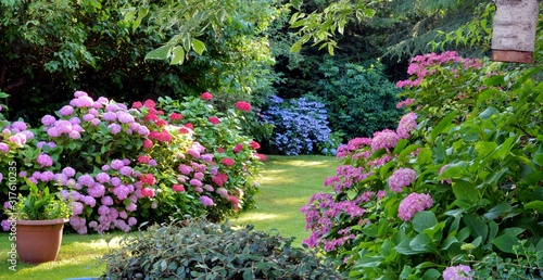 Fotografía Beautiful garden with hydrangeas in Brittany