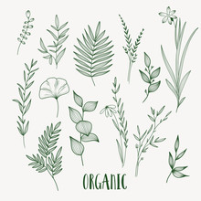 Plant Nature Hand Drawn Set. Collection Botanical Element.