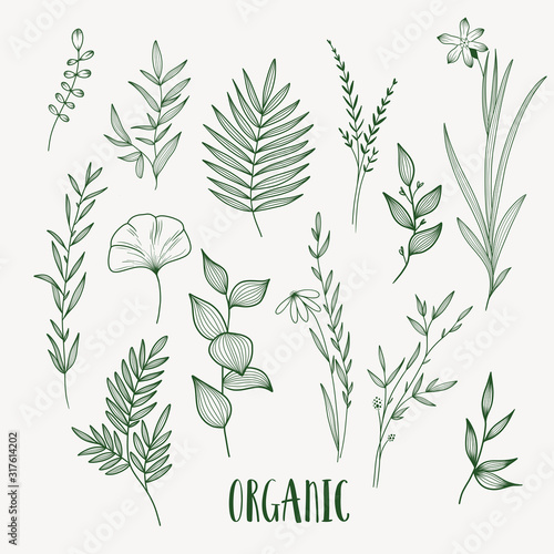 Leinwand Poster Plant nature hand drawn set. Collection botanical element.