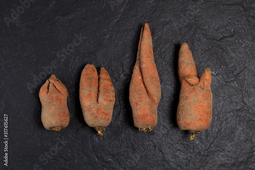 Obraz na plátne Funny ugly carrots located in a row against a dark background.