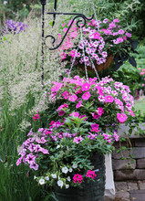 Three Hanging Baskets Of Pink ...