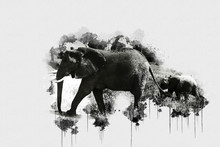 Digital Watercolor Painting Of Elaphant. Painting Of Beautiful Image Of A Elephant In The Forest. Acrylic Paint Of Huge Mammal. Endangered Animal Abstract Paintings Wallpaper. Portrait Of Elephantidae
