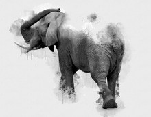 Digital Watercolor Painting Of Elephant. Painting Of Beautiful Image Of A Elephant In The Forest. Acrylic Paint Of Huge Mammal. Endangered Animal Abstract Paintings Wallpaper. Portrait Of Elephantidae