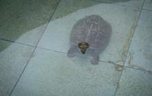 Tortoises Found In The Public ...