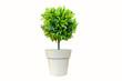 Leinwandbild Motiv Vase, plant, flower, flower, rainy season, room, hotel, interior, beautiful, fresh, tree, wood, flower, wooden table, office, nature, beadroom