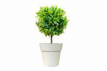 Vase, Plant, Flower, Flower, R...