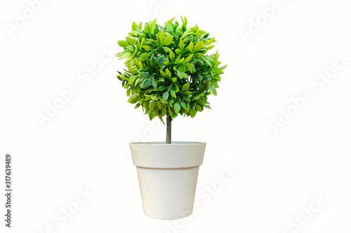 Obraz Vase, plant, flower, flower, rainy season, room, hotel, interior, beautiful, fresh, tree, wood, flower, wooden table, office, nature, beadroom - fototapety do salonu