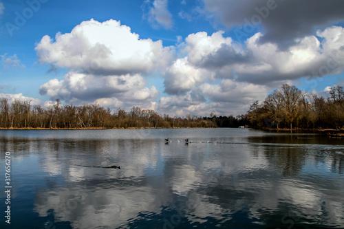 Fényképezés  marais dans un parc en hiver