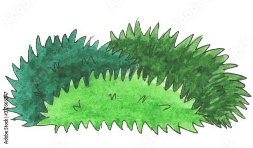 Fotografia, Obraz Watercolor botanical illustration of green grass tussock with sharp shape in forest isolated on white background
