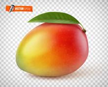 Mangue Vectorielle Sur Fond Tr...