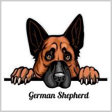 Color Dog Head, German Shepher...
