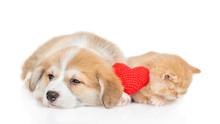 Ginger Baby Kitten Sleeps With...
