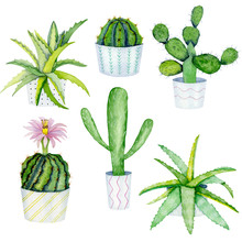 Watercolor Set Of Cactuses In ...