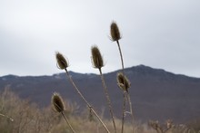 Selective Focus Low Angle Shot Of Thistles With A Mountain In The Background