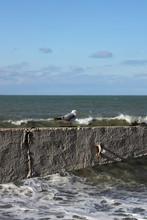 Seagulls On The Breakwater