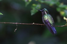 Selective Focus Shot Of A Gree...
