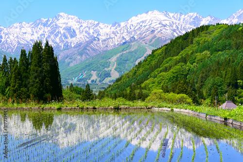 Cuadros en Lienzo 青鬼地区、水田に映る北アルプス。白馬、長野、日本。5月下旬。