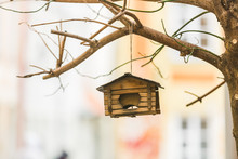 Birdhouse On A Tree Hanging Fr...