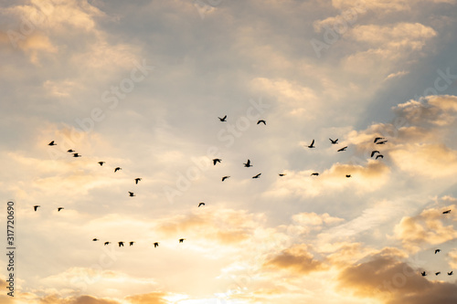Sunrise sky with group of birds