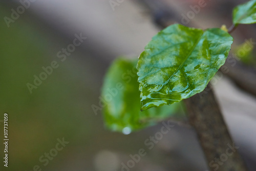 Fotografering forest photography macro