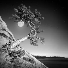 Panel Szklany Podświetlane Czarno-biały Pine and moon. Monochrome colors