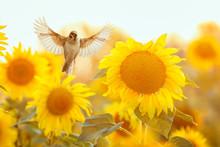 Bird Sparrow Flies To A Brigh...