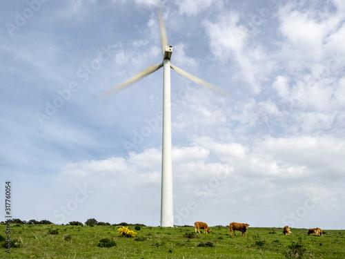 Un aerogenerador en movimiento rodeado de ganado en un parque eólico Canvas Print